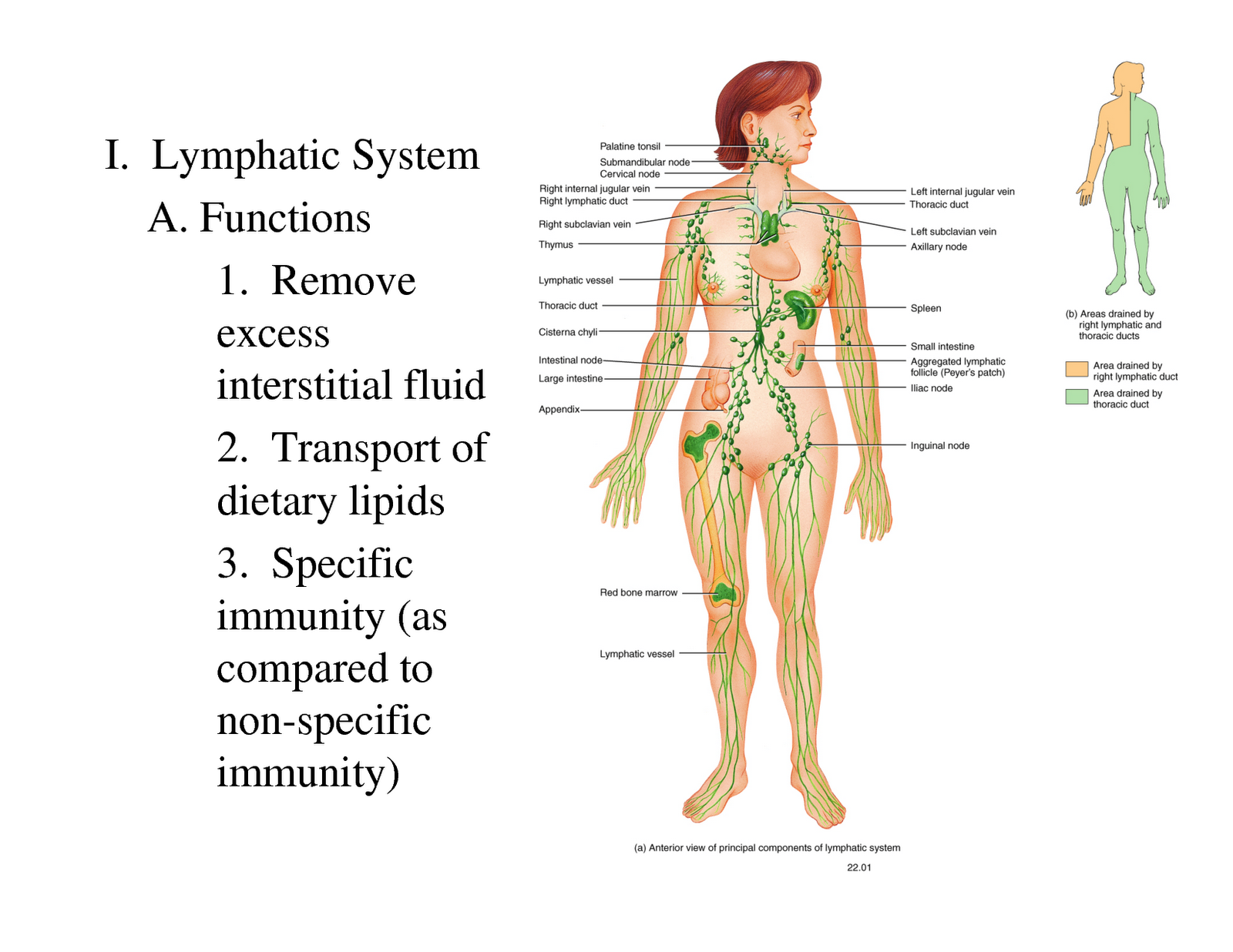 Forum on this topic: How to Cleanse the Lymph System, how-to-cleanse-the-lymph-system/