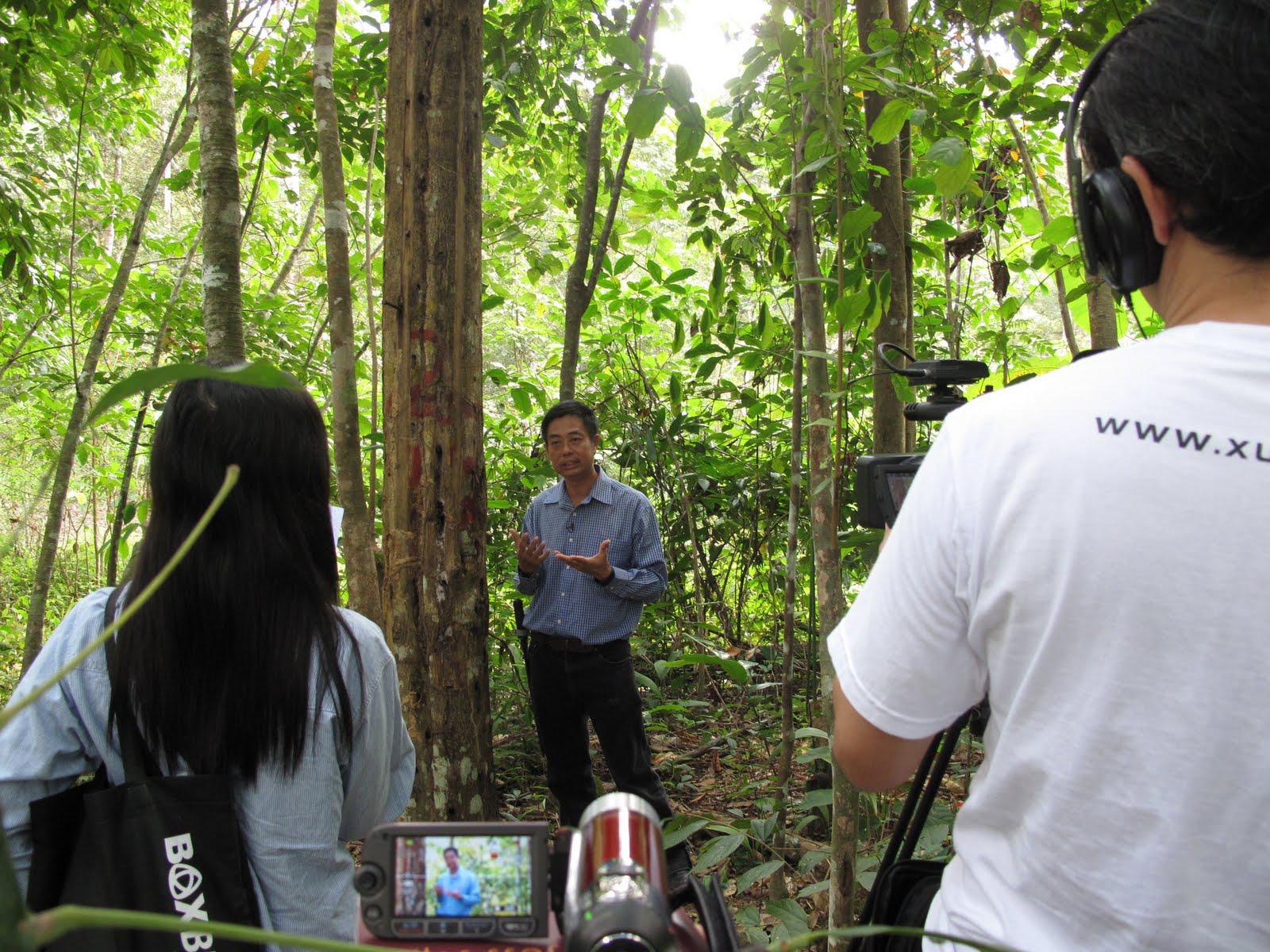 Agarwood Asia 60 Years Old Agarwood Tree Picture 沉香老树