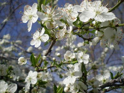 nowruz navruz spring celebrations uzbekistan