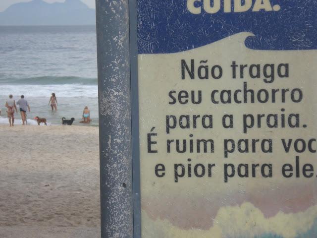 Cachorro na Praia do Diabo (RJ)/Foto: Marcelo Migliaccio