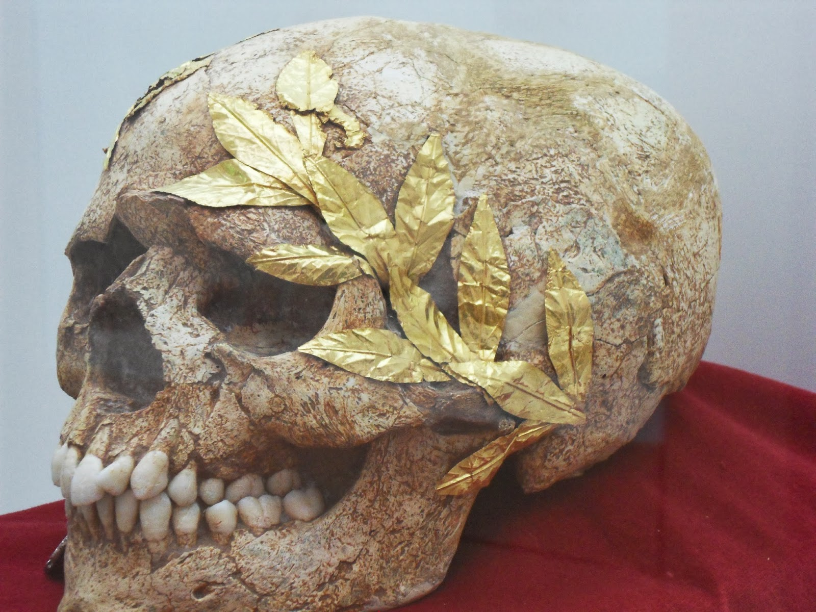 Skull with a golden wreath