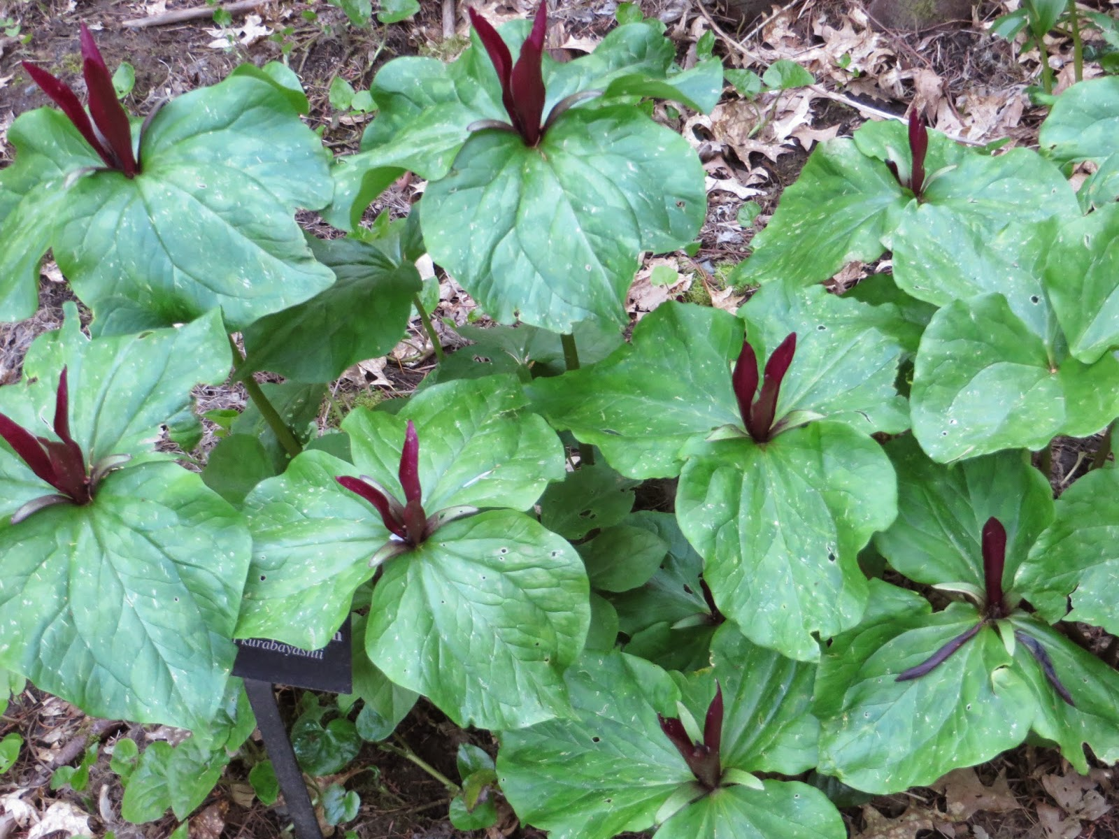Native Plants To Oregon Part - 21: The Following Nurseries All Specialize Or Carry Native Plants: Echo Valley  Natives In Oregon City, Humble Roots Farm And Nursery In Mosier, Oregon  (they ...