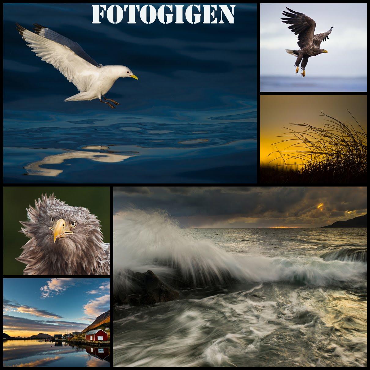FOTOGIGEN.