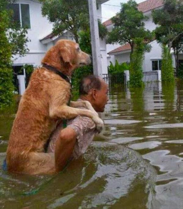 People doing amazing things for animals (28 pics), an old man carries his dog on his back through a flood