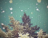tree photograph, branches photo, winter photography, snow, teal green, bokeh, snowflake picture, forest, wall decor, neutral, holiday print