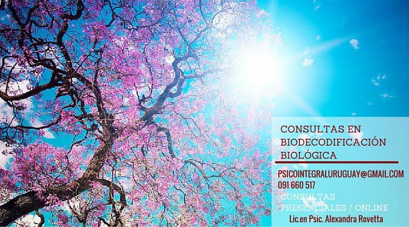 Consultas en Biodecodificación Biológica