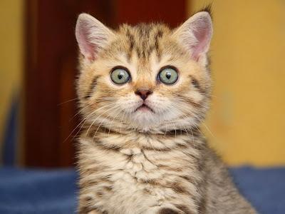 охуевший котик