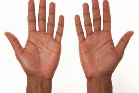di antara anggota tubuh manusia yang paling aktif adalah tangan tangan
