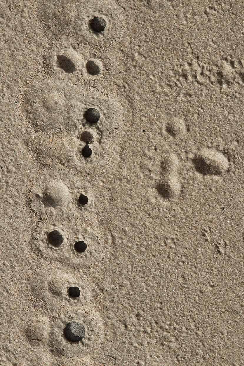 fallen raindrops in sand