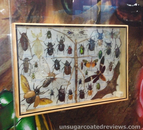 mounted insects