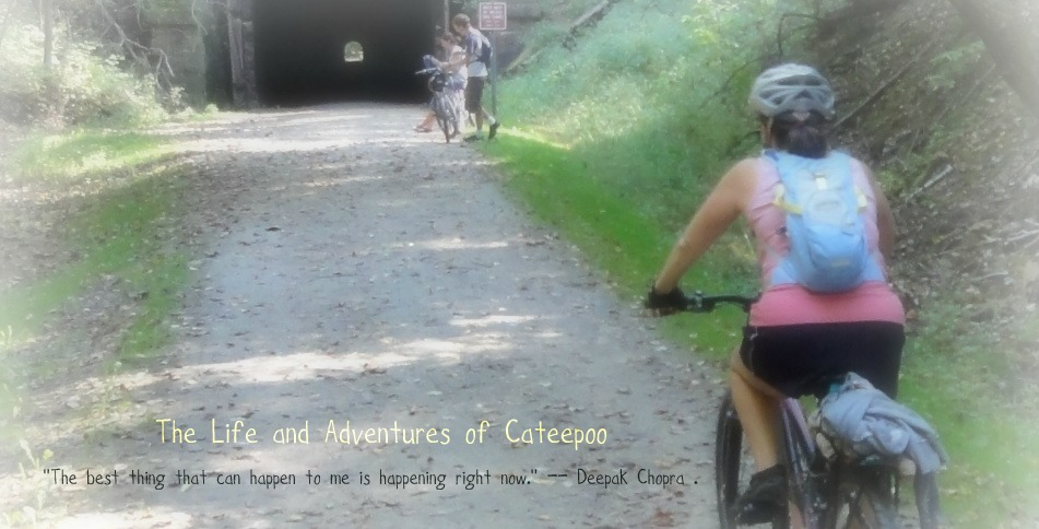 The Life and Adventures of Cateepoo