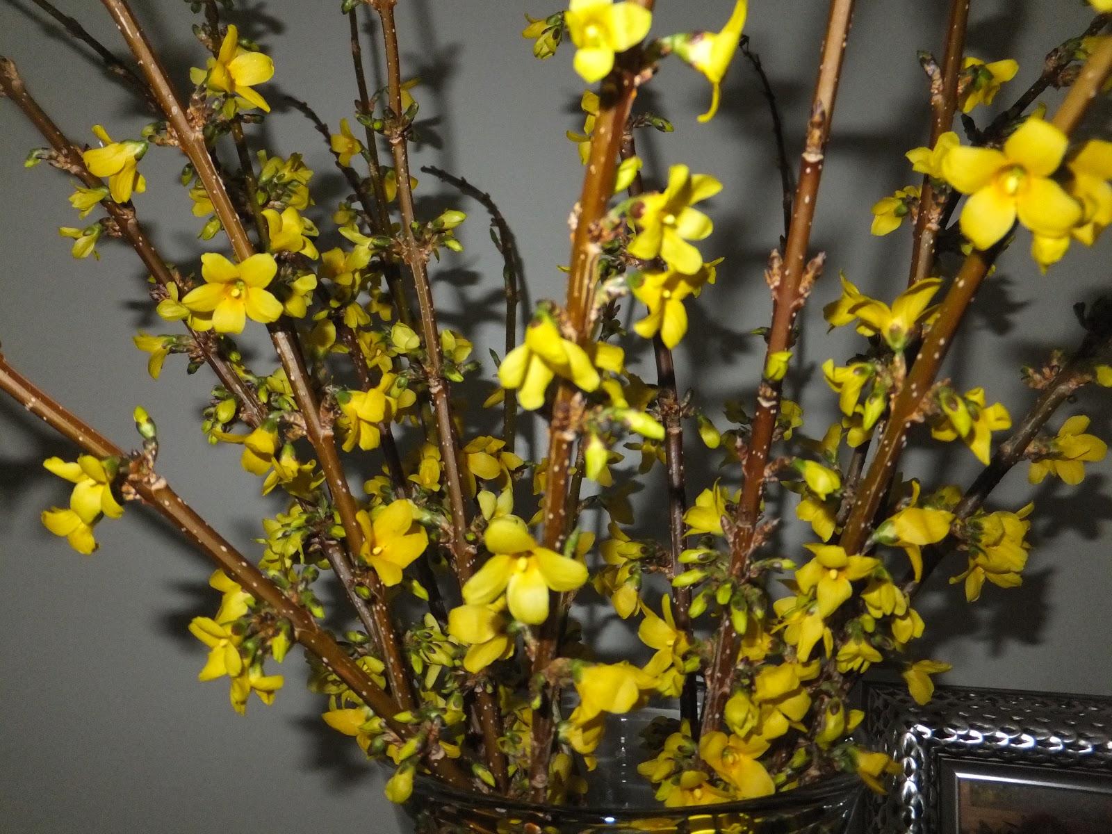 Julie The Garden Fairy: March 2012