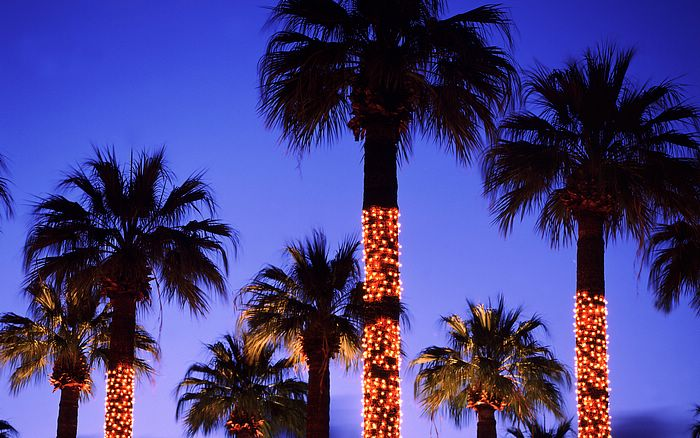 below a few more shots and graphics of florida christmas palm trees click on any image to enlarge right click or drag the image to copy to your desktop - Christmas Palm Trees