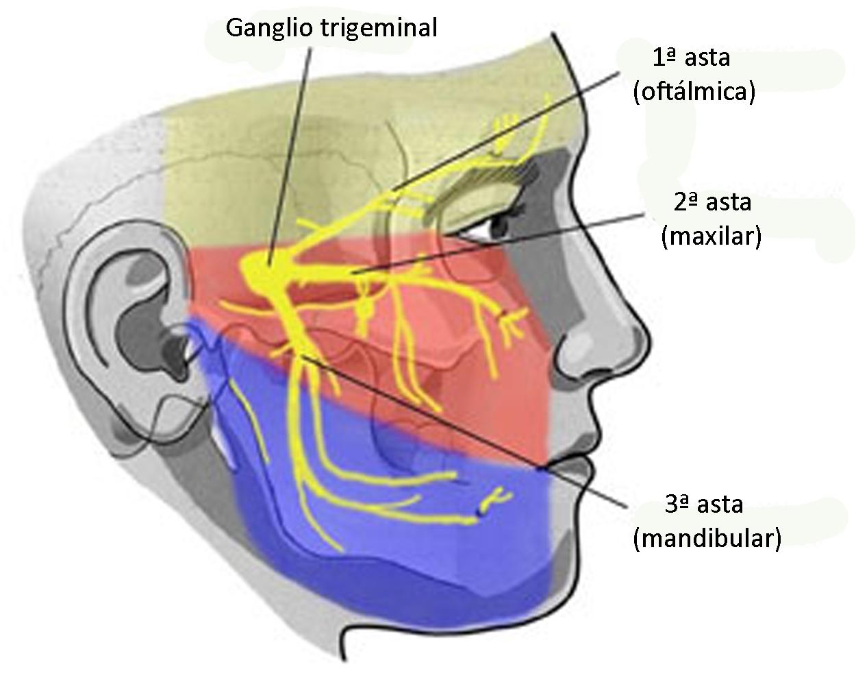 Троичный нерв где находится чем лечить народные средства