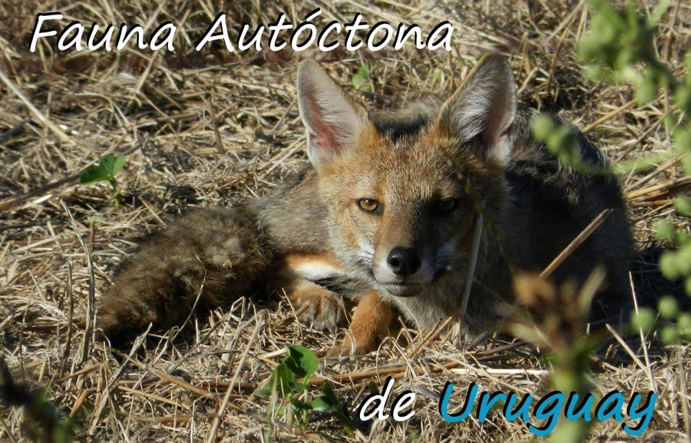 Fauna Autoctóna de Uruguay