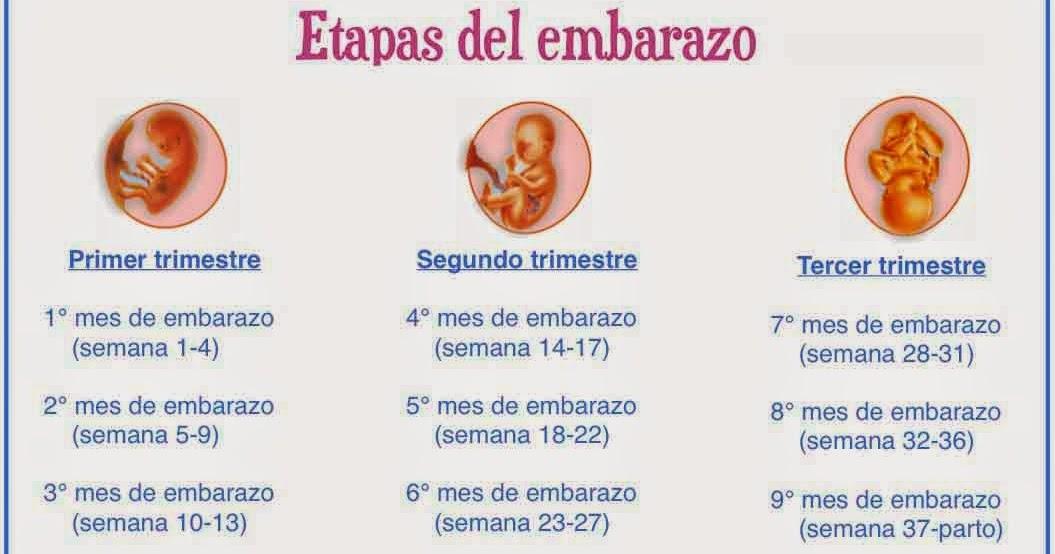 Todo sobre el embarazo s ntomas de embarazo pruebas de embarazo y m s etapas del embarazo - Primer mes de embarazo sintomas ...