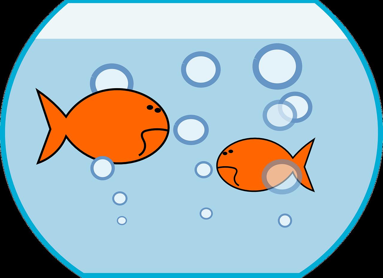 small fish big pond effect