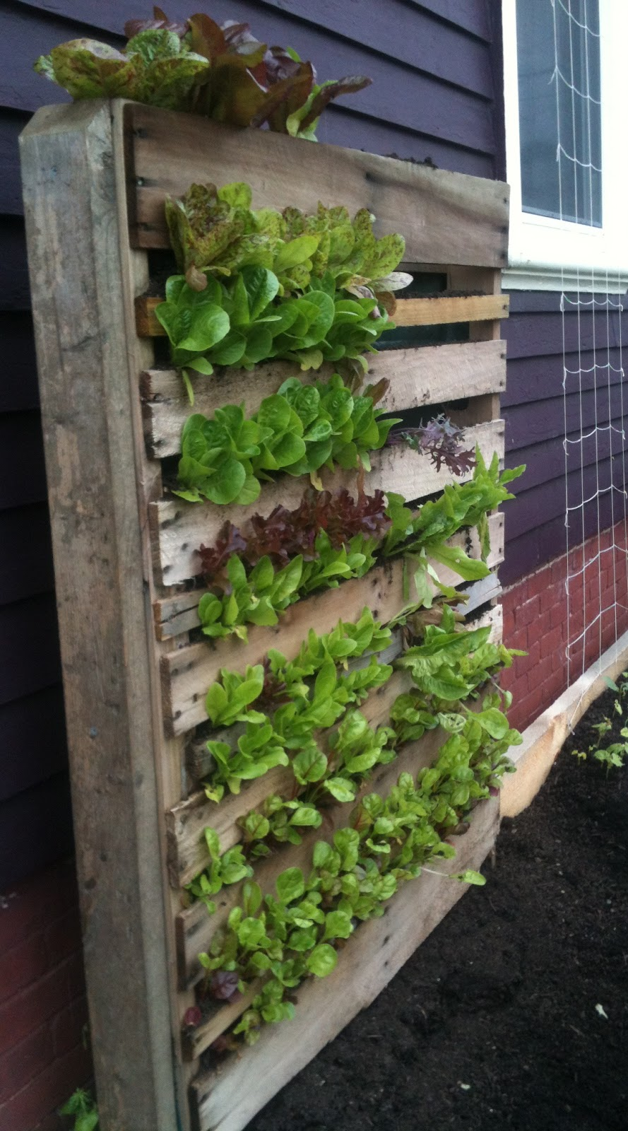 my backyard grows the great salad wall of beacon street