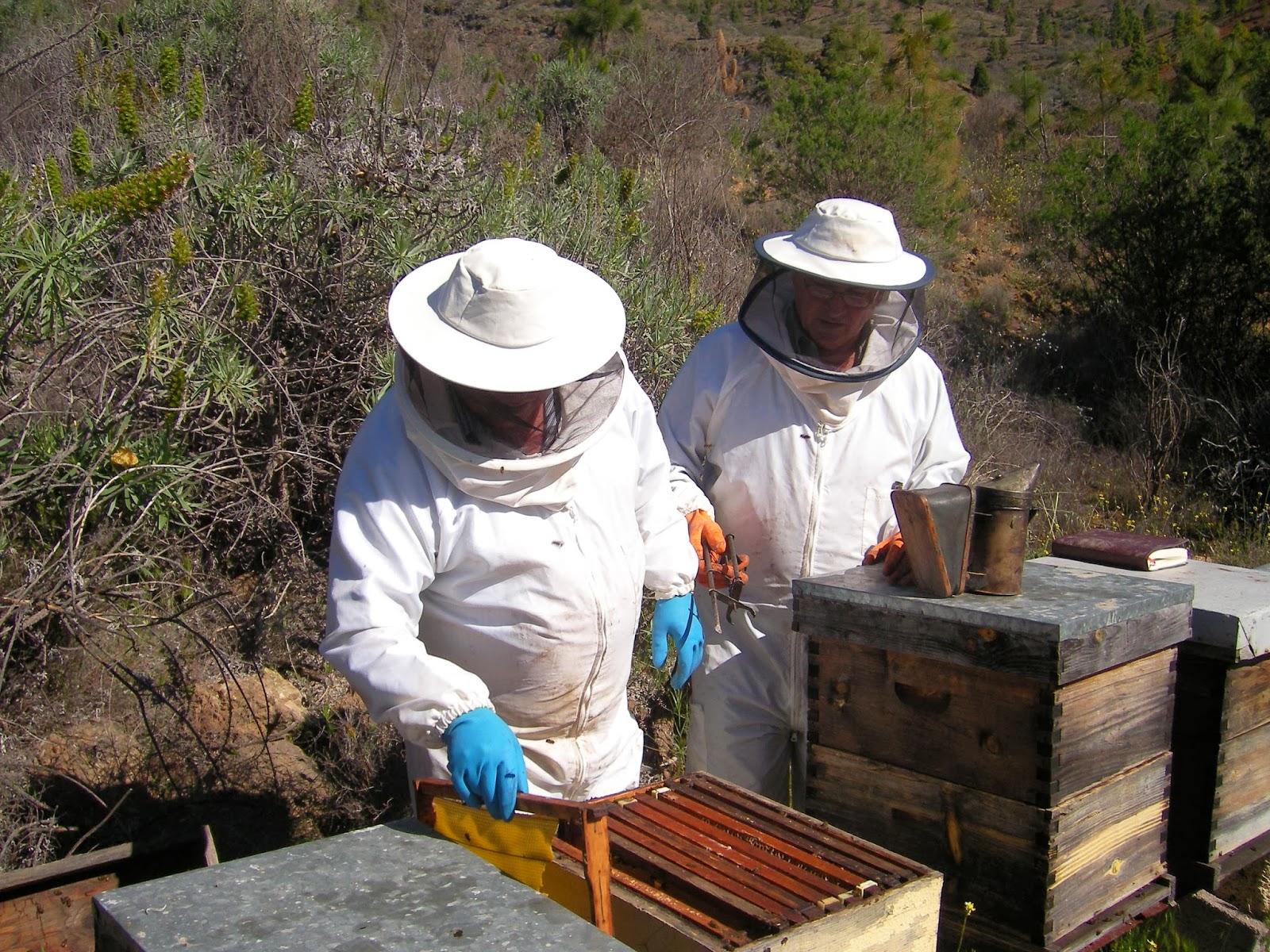 Resultado de imagen de colmenero abejas
