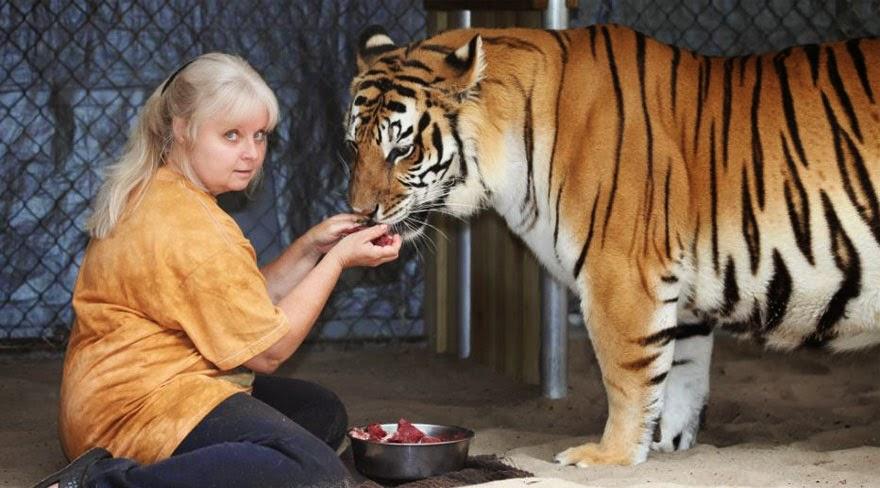 tigres juegan como gatos