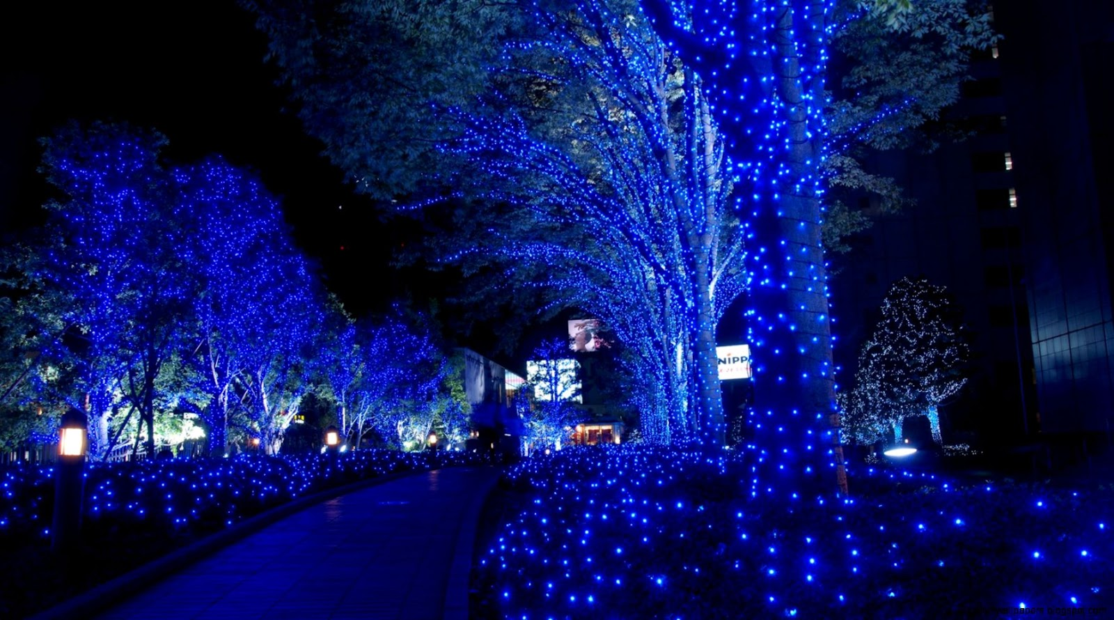 Beautiful Blue Christmas Lights