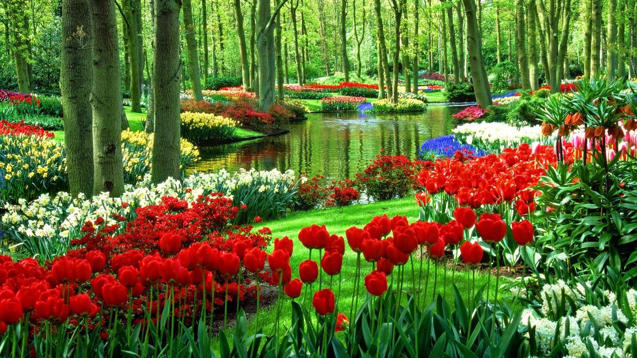 Wallpaper beautiful tulip fields | Gallery Wallpaper HD