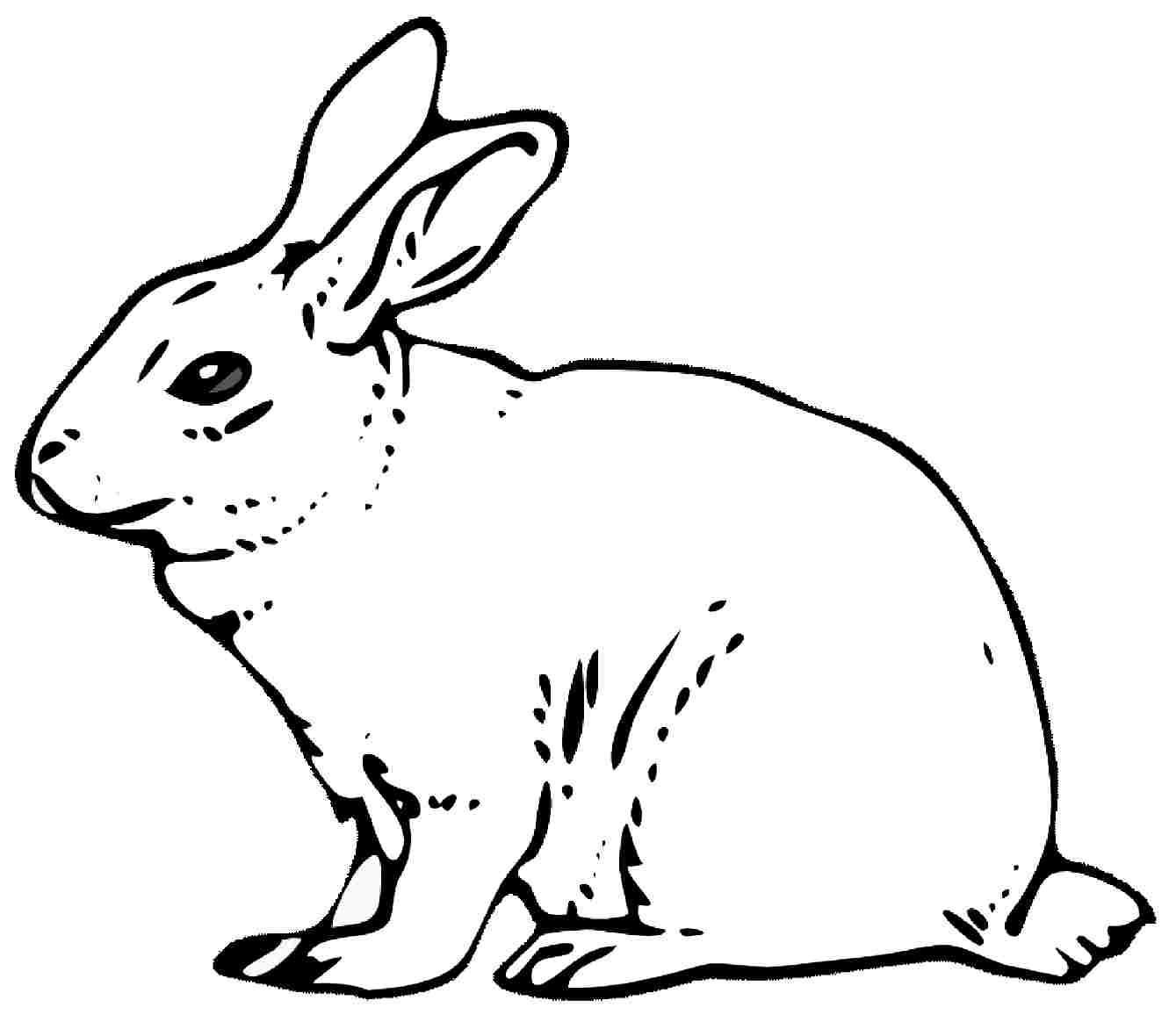 cara mewarnai kelinci mewarnai binatang kelinci Mewarnai Gambar Kelinci bonikids