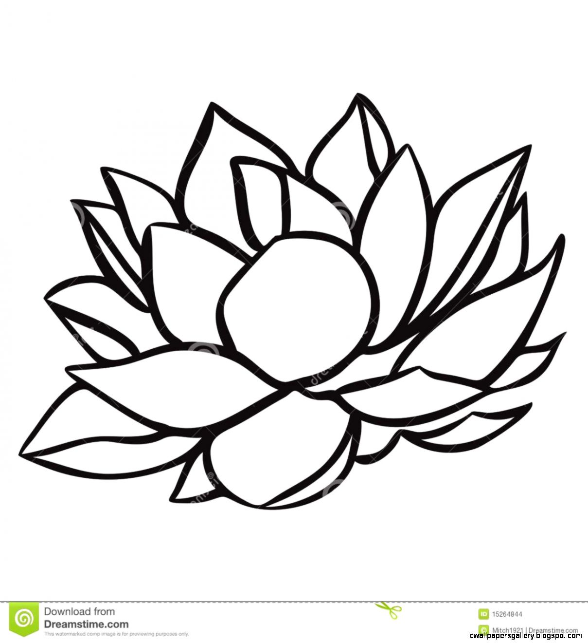 Water Lily Drawing Related Keywords  Suggestions   Water Lily