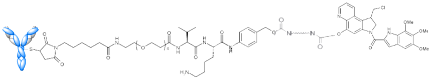 Antibody Drug Conjugate (ADC) attached to Duocarmycin - ADC SYD985 (anti-HER2 ADC) developed by Synthon in the Netherlands - as of 2015 in phase I clinical trial