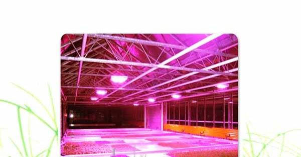 led horticole distance entre la plante quarkled ampoule led eclairage led. Black Bedroom Furniture Sets. Home Design Ideas