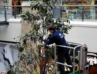 Dusting the trees in Belfast's Victoria Square