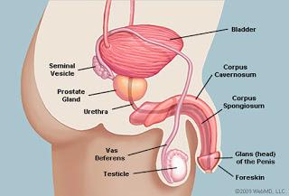 Cara Memperbesar dan Memperpanjang Penis Tanpa Obat