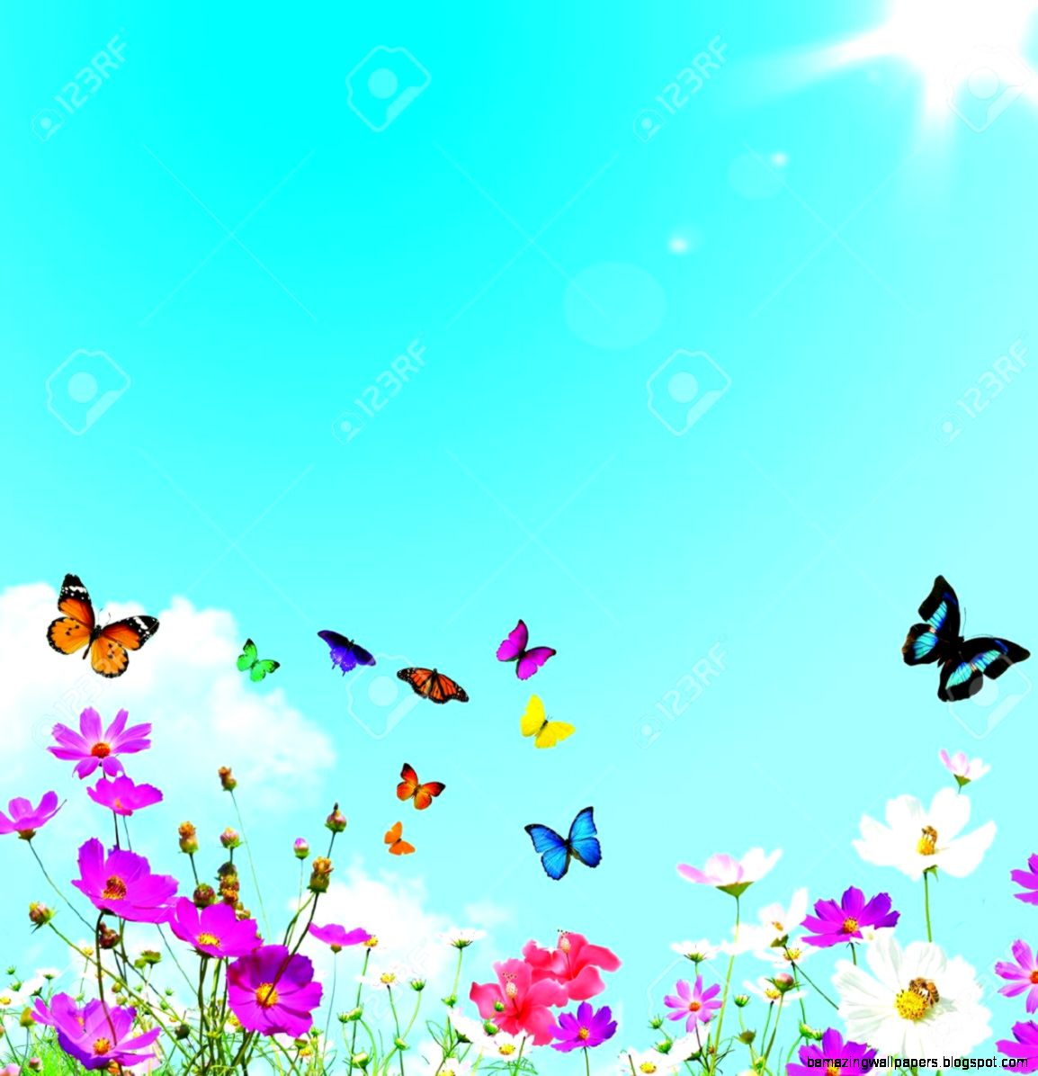 Colorful Spring Flowers And Butterflies Stock Photo Picture And