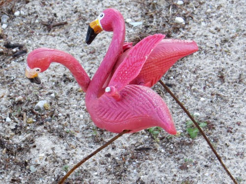 plastic flamingos on beach