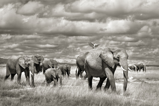 marina cano wildlife landscape photographer, jungle, wild animals, elephants