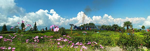 Darjeeling tourism sector Rs 150 crore loss, 80%  booking cancelled