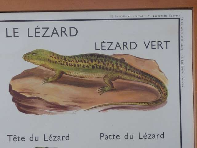 Vintage french posters school animals snakes