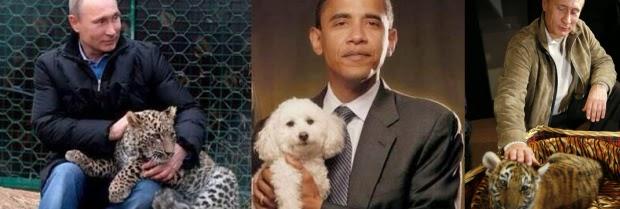 Pocket Hobby - www.pockethobby.com - #HobbyNews - Vladmir Putin, Tigre e muito mais!!