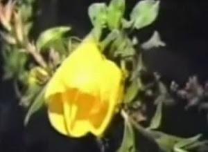Azan Flower - Mekar Ketika Azan Berkumandang