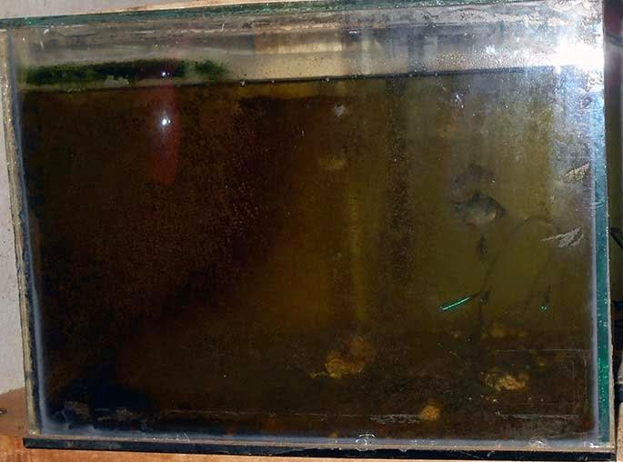 akuarium kotor