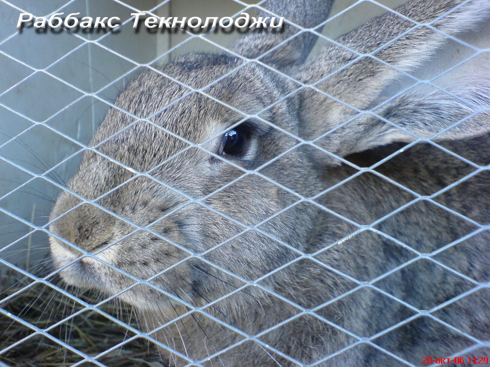Утримання самців кролики