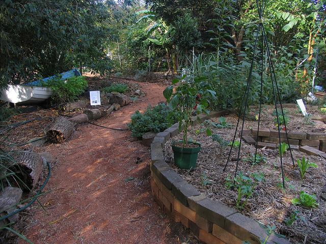 ryde tafe permaculture garden