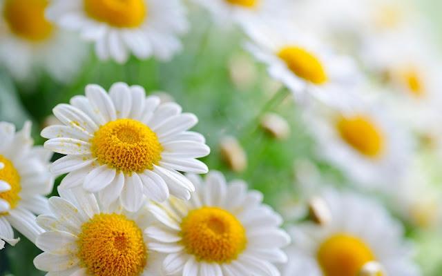 Hình nền khu vườn mùa xuân - ảnh 7