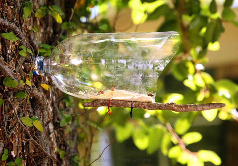 Soda bottle bird feeder for How to make a bottle bird feeder