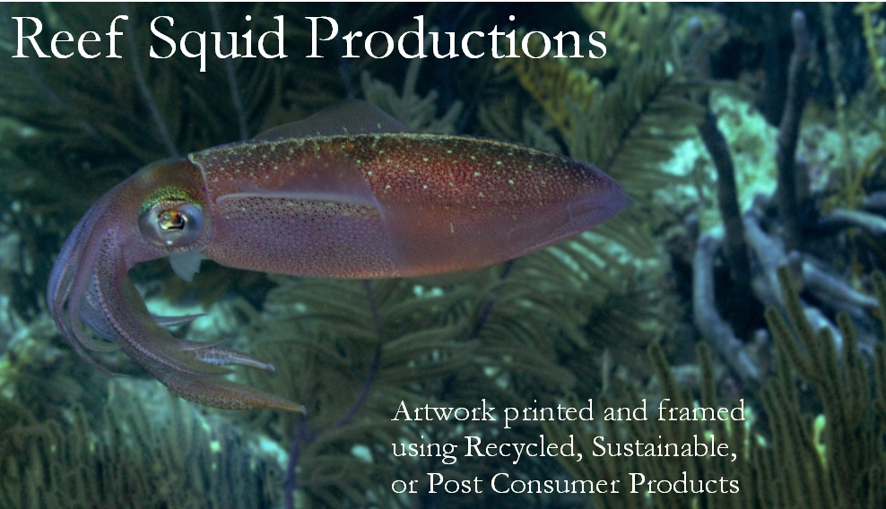 Reef Squid Productions
