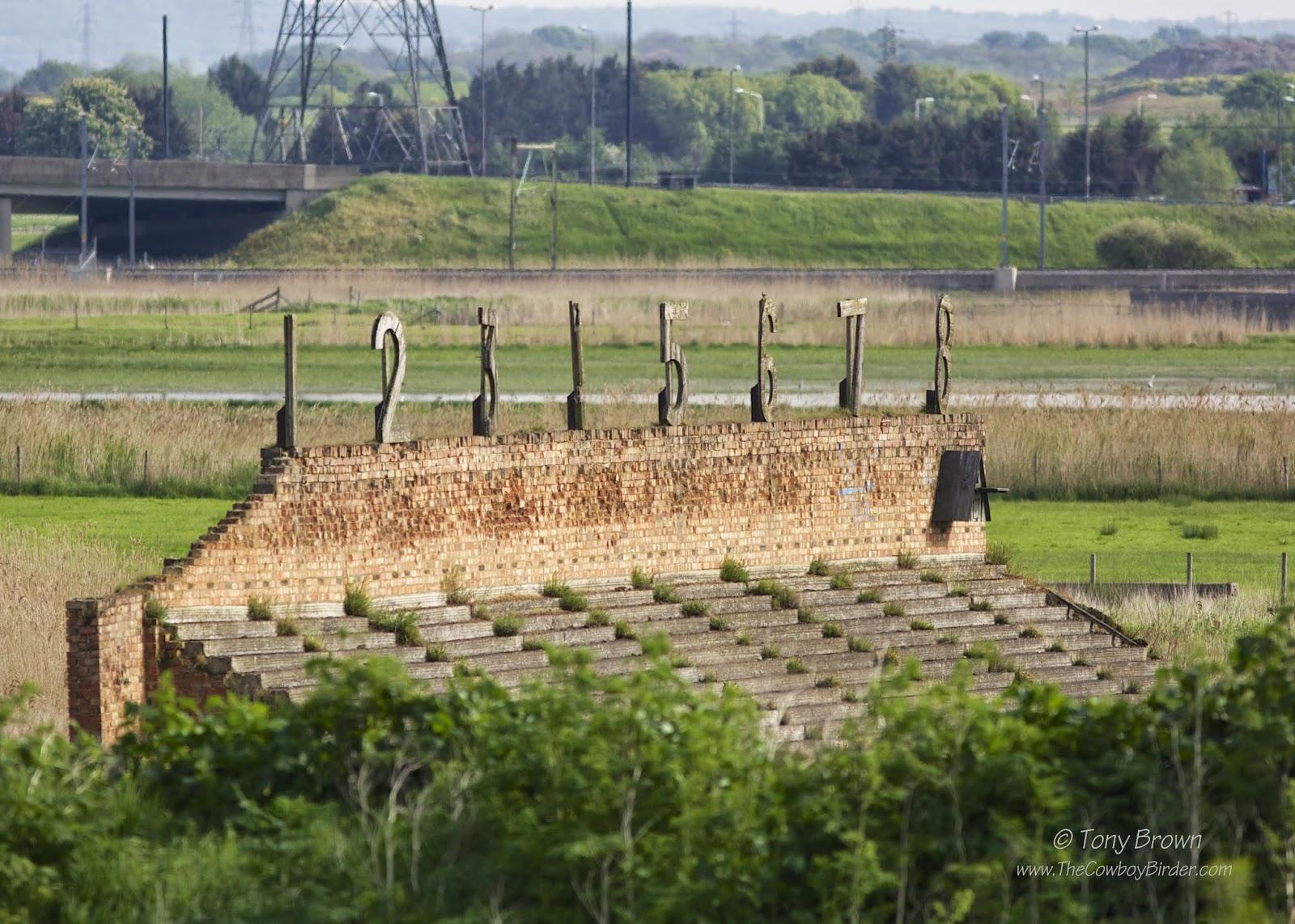 RSPB, Targets, Marsh