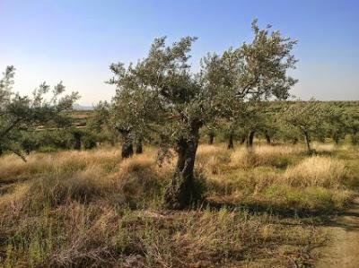Η ερευνητική ένδεια και οι ενεργειακές καλλιέργειες
