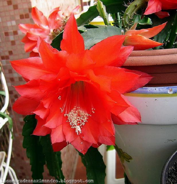 La c mara de anaximandro flores aut ctonas de mis macetas 2 Plantas de sol directo para jardin