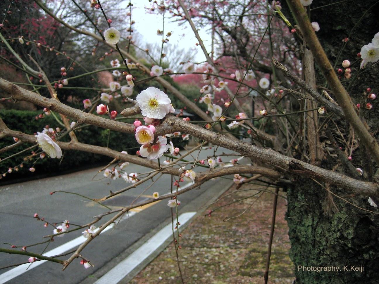 長谷川久蔵の画像 p1_33
