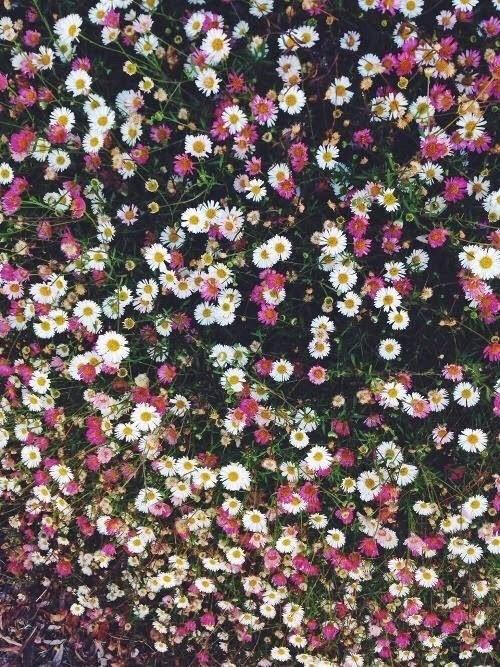 plano de fundo Tumblr - imagens para celular tumblr